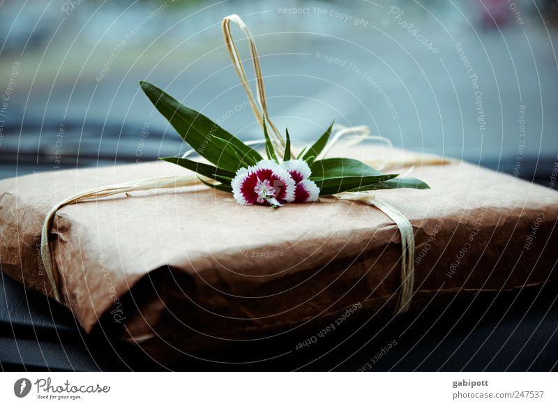 300 | ein Geschenk Verpackung Dekoration & Verzierung Blumenstrauß Schleife liegen außergewöhnlich Duft einfach blau braun grün rot Fröhlichkeit Lebensfreude