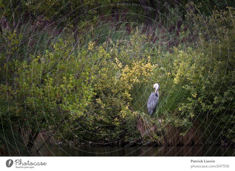 Nesthocker Natur grün ruhig Tier Umwelt Küste Vogel elegant wild Wildtier einzigartig Urelemente Reinigen Frieden Schutz Freundlichkeit