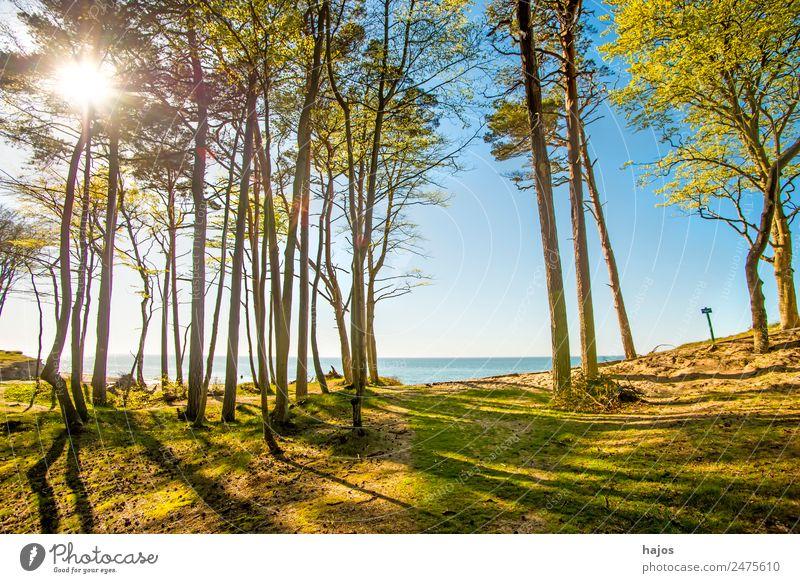 Ostseeküste in Polen Strand Natur Wald Tourismus Küste Düne Meer Naturschutzgebiet Himmel blau Gegenlicht Sommer Sonne Ferien & Urlaub & Reisen Bäume Farbfoto