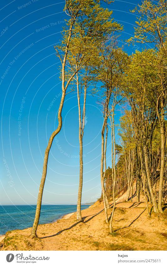Strand an der polnischen Ostseeküste Natur Ferien & Urlaub & Reisen Tourismus Polen wild einsam natürlich Bäume Düne Me blau karibisch Himmel schön Oase