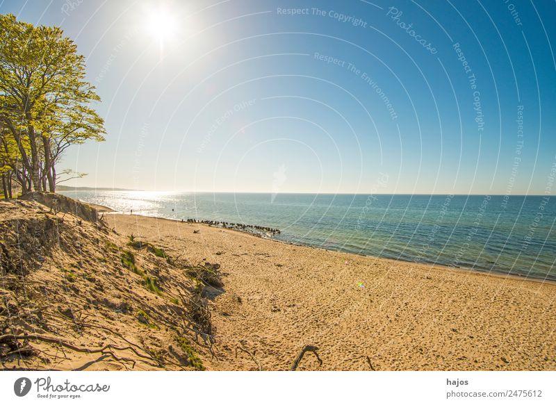 Strand an der polnischen Ostseeküste Natur Tourismus Polen ein menschenleer natürlich Bäume Dünen Sandstrand Himmel blau Sonne Gegenlicht Urlaub