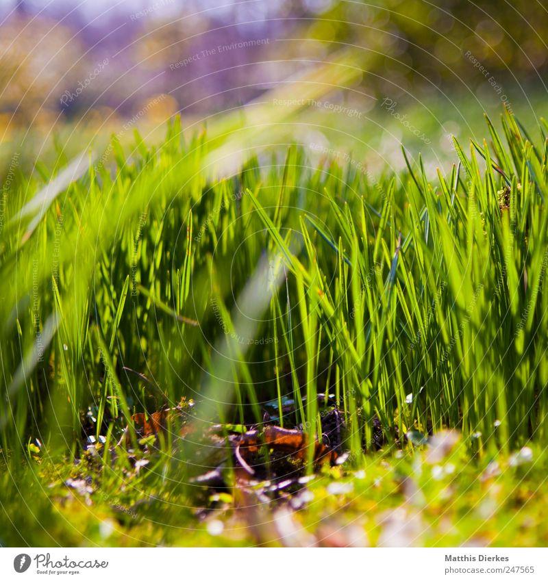 Saftiges Grün Umwelt Natur Pflanze ästhetisch Wiese Hintergrundbild saftig grün Park Lichtpunkt Reflexion & Spiegelung Lichterscheinung Sonnenlicht Beleuchtung