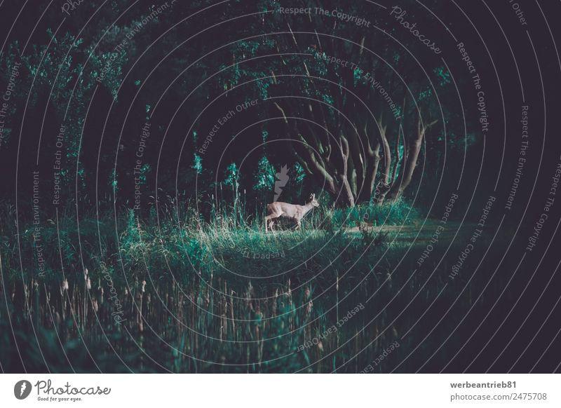 Junge Rothirsche in der Wildnis Jagd Sommer Umwelt Natur Landschaft Tier Baum frei klein wild grün rot Bleßwild jung Hirsche Säugetier laufen bewegend