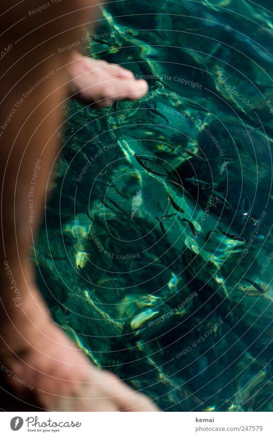 Klar Ferien & Urlaub & Reisen Tourismus Sommer Sommerurlaub Meer maskulin Beine Fuß 1 Mensch Wasser Schönes Wetter Meerwasser Tier Wildtier Fisch Fischschwarm