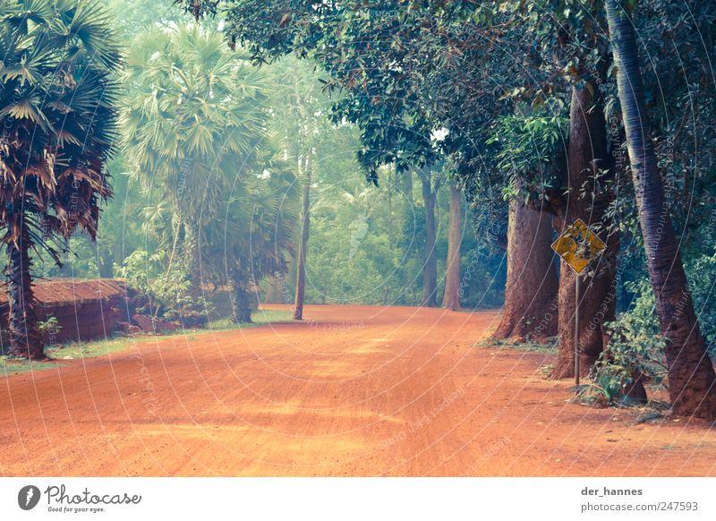 Scharfe Rechtskurve in 200m Natur Baum schön rot Pflanze Wald Straße Leben Umwelt Sand Erde Wüste außergewöhnlich fantastisch Urwald Verkehrswege