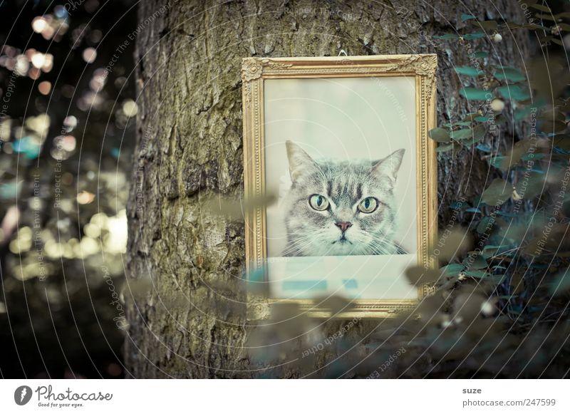 Katzenbaum Katze Natur alt Baum Blatt Umwelt lustig außergewöhnlich gold Sträucher Coolness Bild Tiergesicht Baumstamm hängen tierisch