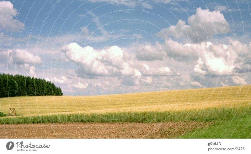 cornfield & sky Himmel Wolken Natur Landschaft Freiheit