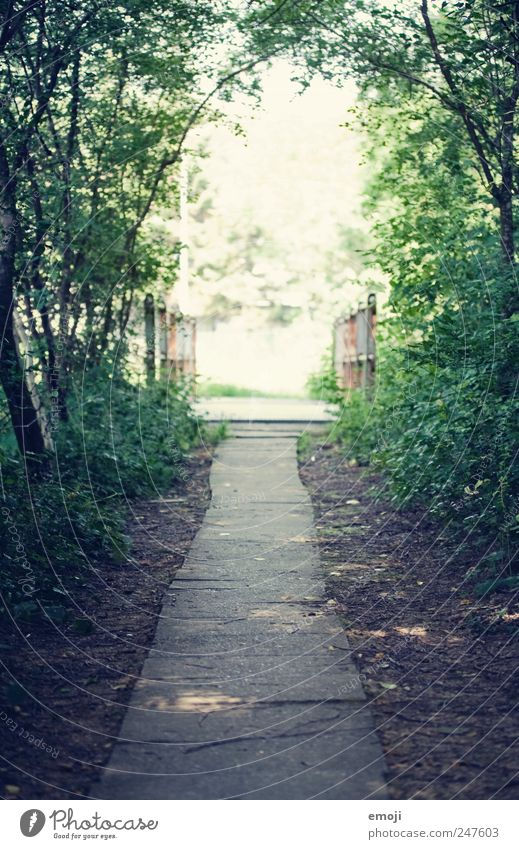 Märchenweg Schönes Wetter Baum Sträucher Park grün Wege & Pfade Waldlichtung Steinplatten natürlich Verhext Märchenlandschaft Märchenwald Farbfoto Außenaufnahme