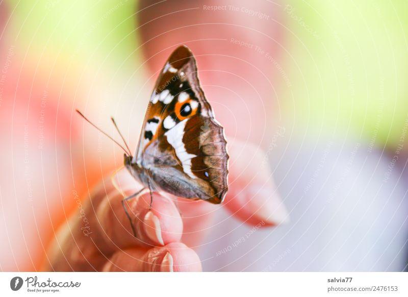 schau mal... Haut Finger 1 Mensch Natur Sommer Schmetterling Insekt Schillerfalter Tier frech nah Neugier positiv mehrfarbig Sympathie Tierliebe Durst