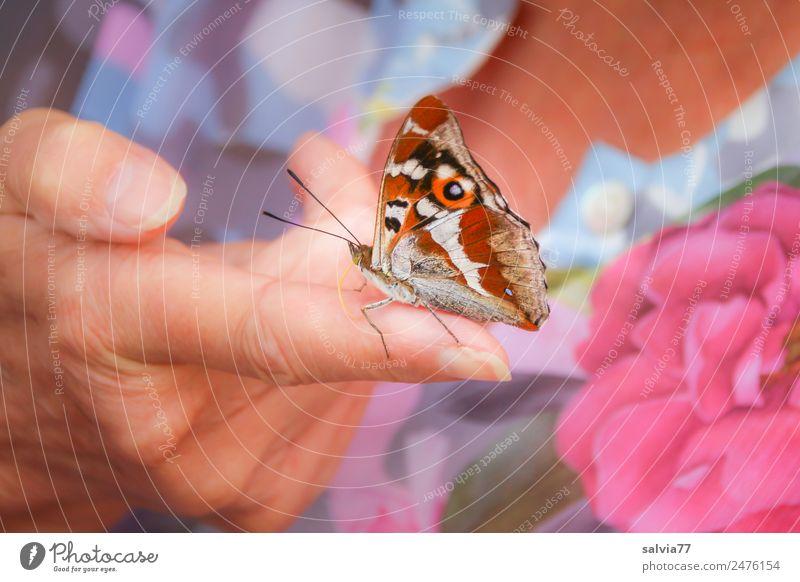 süßer Finger Haut Hand Stoff Bluse Tier Schmetterling Flügel Insekt Schillerfalter 1 genießen Liebe Vertrauen Tierliebe schön Design Farbe Blume sommerlich