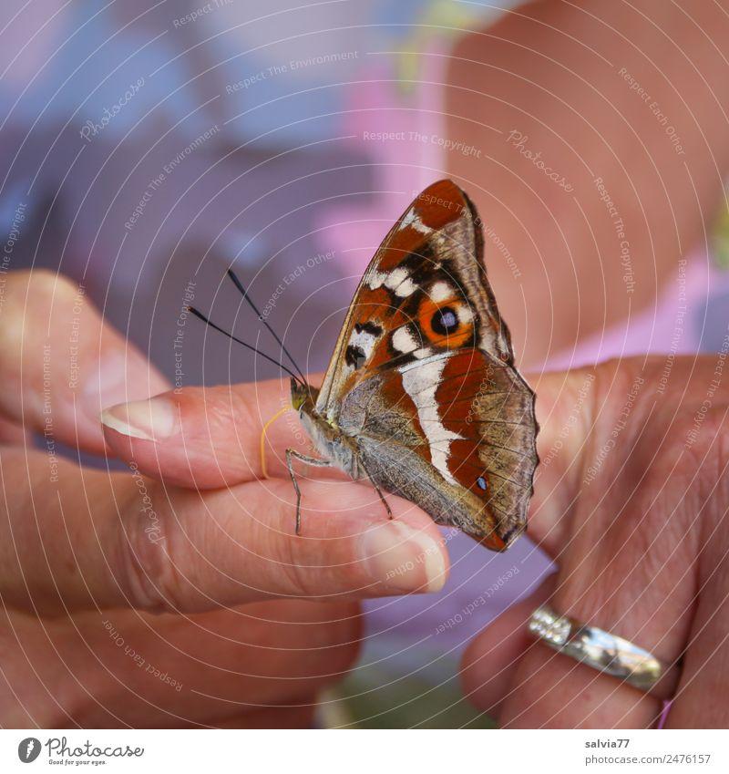 Kurioses | Finger statt Blüte Haut 1 Mensch Natur Tier Wildtier Schmetterling Insekt ästhetisch niedlich positiv mehrfarbig Vertrauen Tierliebe blumig Sommer