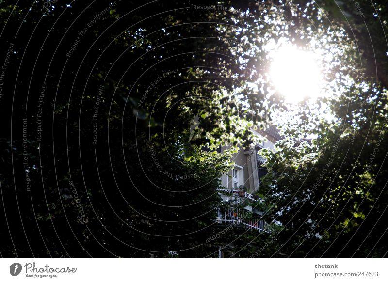 lichtblick Baum Ferien & Urlaub & Reisen Sonne Blatt Einsamkeit Erholung Fenster Garten Zufriedenheit hoch Perspektive Häusliches Leben Sicherheit Dach Romantik