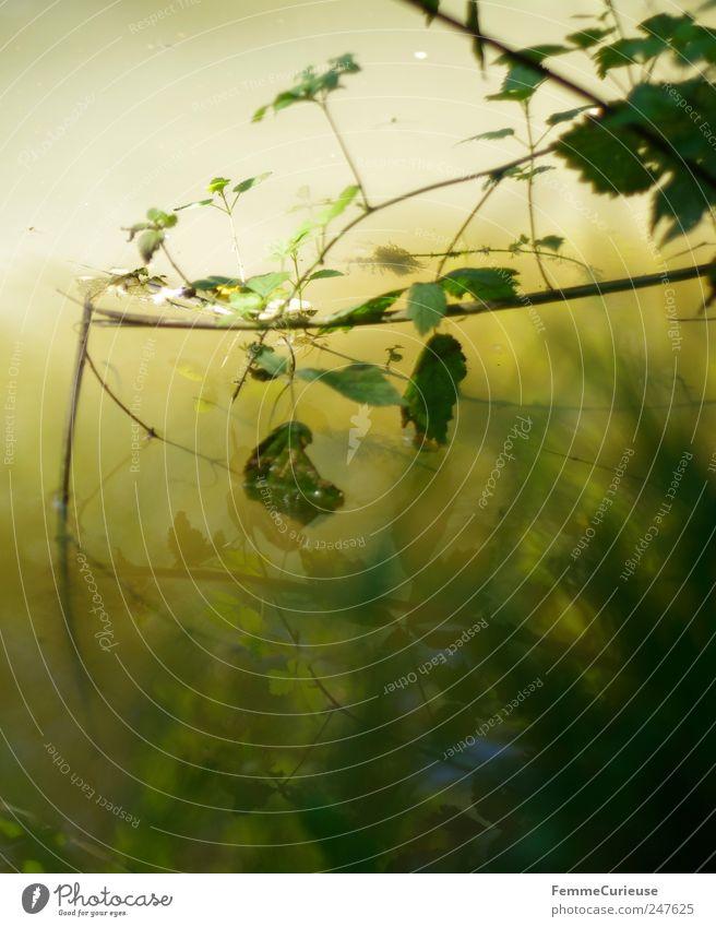 Tiefe Stille herrscht im Wasser. Leben harmonisch Sinnesorgane Erholung ruhig Meditation Angeln Ferien & Urlaub & Reisen Ausflug Sommer Garten wandern