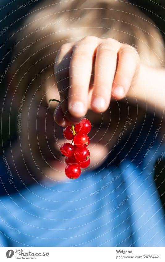 Beerentraum Kind Mensch Sommer blau Hand rot Gesundheit Junge Lebensmittel Spielen Frucht Kindheit lecker Ernte Bioprodukte Kleinkind