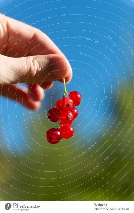 Beerentraum Lebensmittel Glück Wellness harmonisch Wohlgefühl Zufriedenheit Sinnesorgane Fröhlichkeit frisch Gesundheit rosa schön Sommer Ernte Marmelade lecker