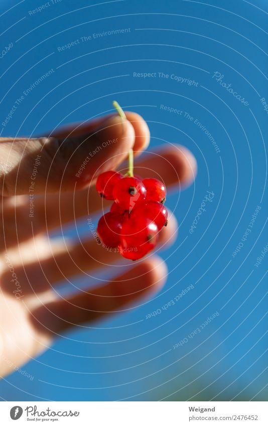 Beerentraum Lebensmittel Ernährung Frühstück Wellness harmonisch Sinnesorgane glänzend rund saftig blau rot Johannisbeeren Frucht Gesunde Ernährung