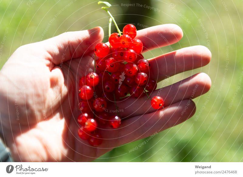 Johannistraum Lebensmittel Ernährung Frühstück frisch Gesundheit glänzend Hand Beeren lecker Ernte Johannisbeeren Frucht Marmelade Garten pflücken Juli Juni