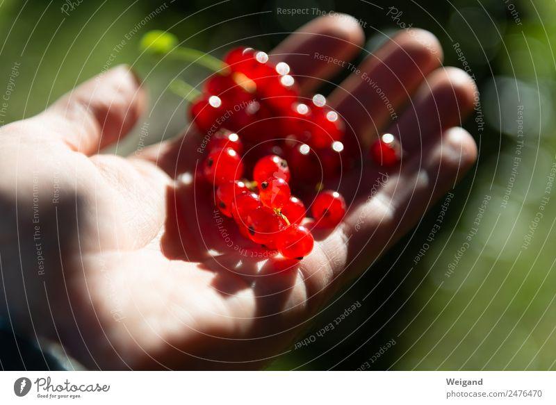 Rotgold Lebensmittel Marmelade Wohlgefühl Zufriedenheit Natur Tier entdecken glänzend Glück rot Frucht Gesundheit Gesunde Ernährung Johannisbeeren Beeren Sommer