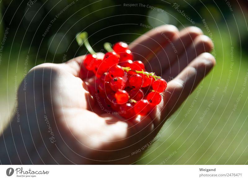 Ernteglück Ernährung Frühstück Mittagessen Bioprodukte Vegetarische Ernährung Diät Fröhlichkeit frisch Gesundheit rot dankbar Verantwortung achtsam Sommer