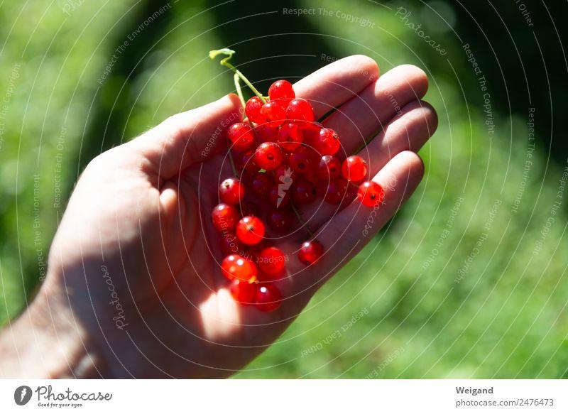 Johannisbeere Lebensmittel Ernährung Essen Bioprodukte Vegetarische Ernährung Diät Fasten Wellness harmonisch Wohlgefühl rot nachhaltig Beeren Ernte Sommer