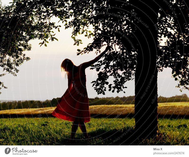Gestatten / Damenwahl Mensch Jugendliche schön Baum Sommer ruhig feminin Wiese Landschaft Garten Gras Stil Erwachsene Tanzen elegant Kleid