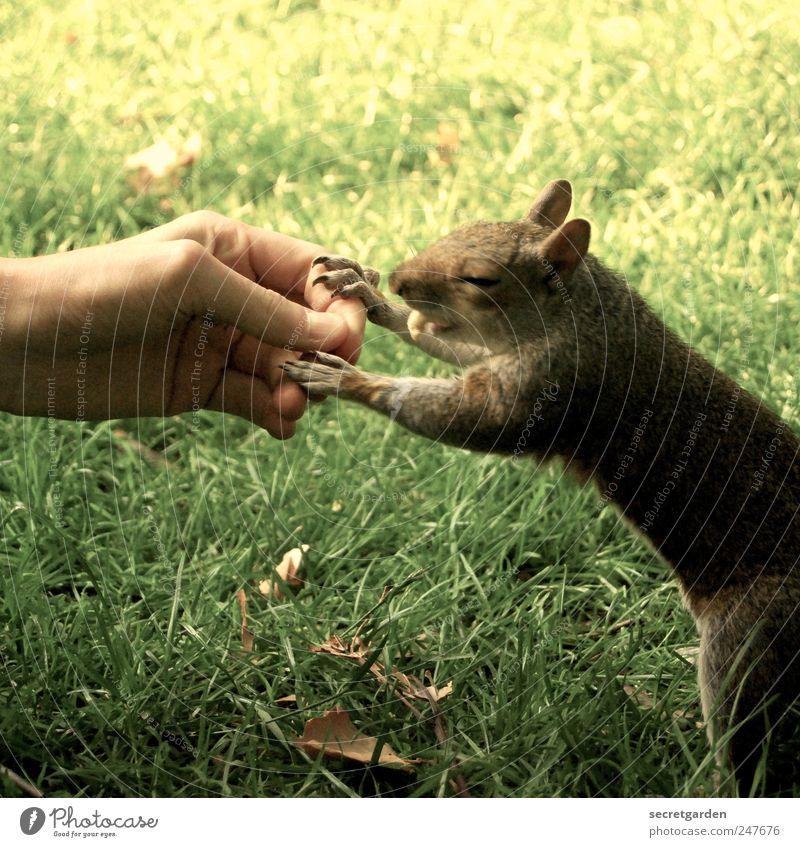 """fast"" food Lebensmittel Mensch Haut Hand Finger 1 Natur Gras Park Wiese Tier Wildtier Fell Krallen Pfote Eichhörnchen berühren festhalten Fressen lecker braun"
