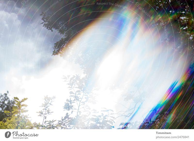 Kurioses | Catch the wind Himmel Natur blau Pflanze Landschaft Sonne weiß Umwelt Gefühle Garten Denken Luft ästhetisch Wind Schönes Wetter Vergänglichkeit