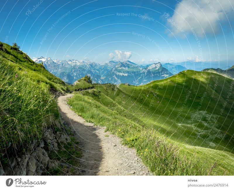 Gratwanderung Stops Schweiz Natur Ferien & Urlaub & Reisen Pflanze Landschaft Baum Erholung Tier Ferne Berge u. Gebirge Umwelt Wege & Pfade Bewegung Gras