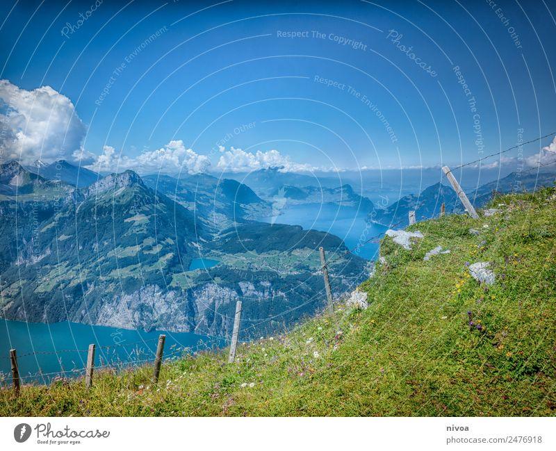 Blick vom Stoos auf den Vierwaldstättersee Himmel Natur Sommer Pflanze Landschaft Baum Blume Erholung Tier Wolken Ferne Berge u. Gebirge Umwelt Wege & Pfade