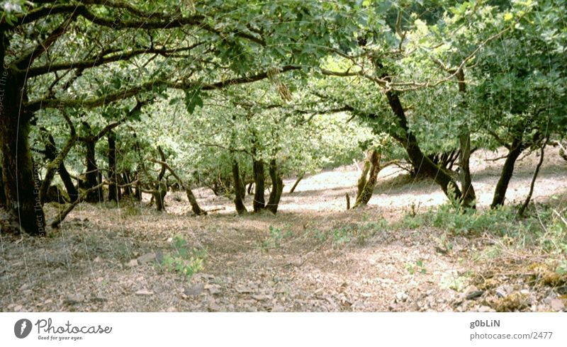 Abgrund Natur Baum Stein dreckig Erde Berghang