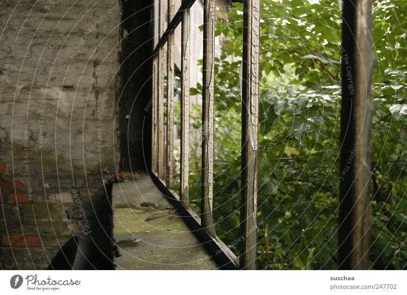 wenn draussen nach innen kommt .. Natur alt grün Blatt kalt dunkel Wand Fenster Stein Mauer Gebäude Metall gehen Beton Armut Sträucher