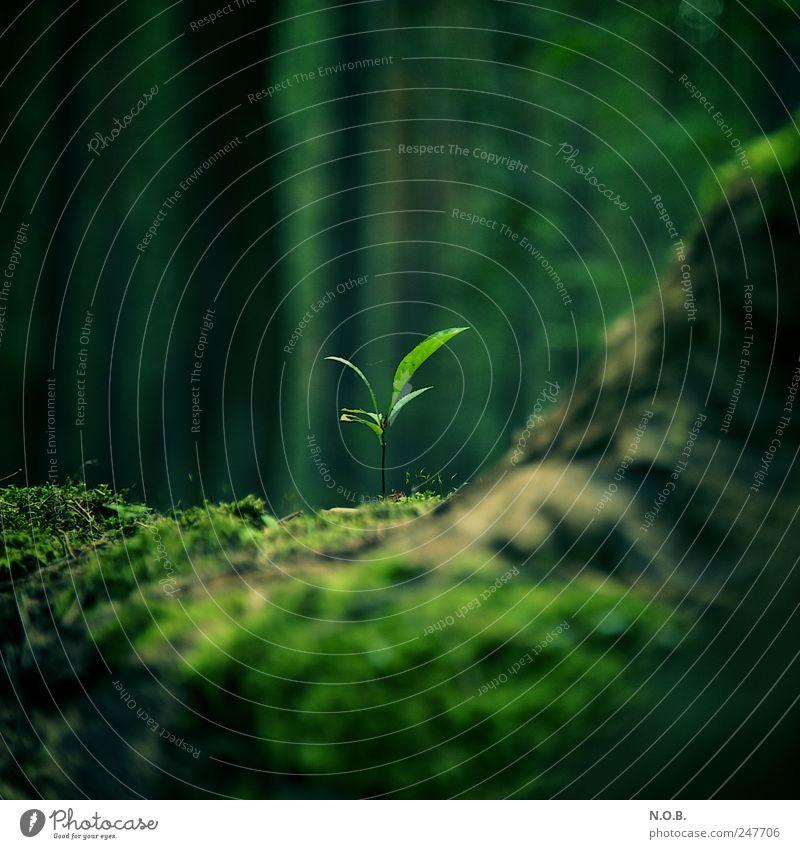 Feuchte Lebensumstände Natur grün Baum schön Pflanze Sommer Blatt ruhig Wald Umwelt Gefühle klein Frühling nass natürlich Klima