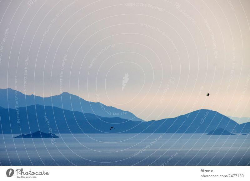 Durststrecke | Reif für die Insel Himmel blau Landschaft Meer Tier Einsamkeit ruhig Berge u. Gebirge Vogel fliegen träumen nachdenklich Gipfel Sehnsucht Fernweh