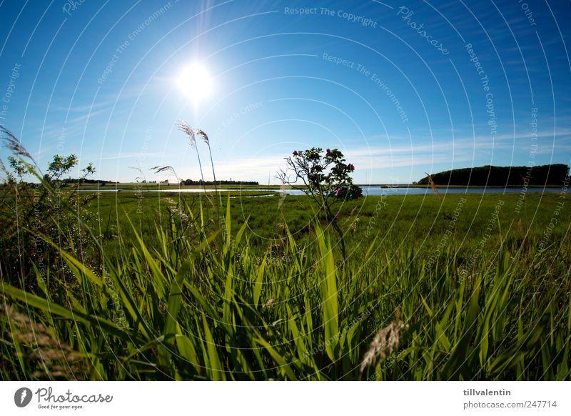 blau. weiß. grün. Umwelt Natur Landschaft Pflanze Wasser Himmel Horizont Sonne Sonnenlicht Sommer Klima Schönes Wetter Gras Sträucher Grünpflanze Schilfrohr