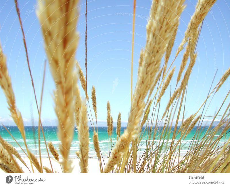 Playa de Valdoviño (España) Natur Wasser Himmel Meer blau Sommer Strand Ferien & Urlaub & Reisen Ferne Sand Wind Wetter heiß Spanien Schönes Wetter Atlantik