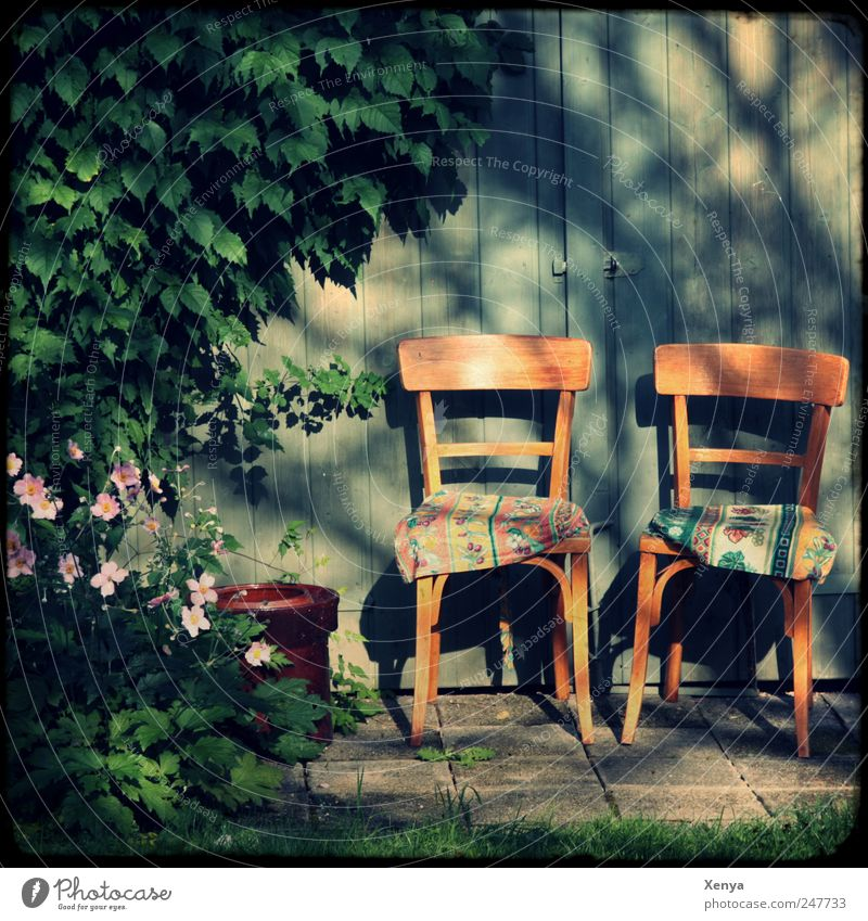 Ein Platz für zwei im Schatten Pflanze Sträucher Garten Stuhl Kissen Holzwand blau braun grün rosa Zufriedenheit Vertrauen Sicherheit Geborgenheit Haus
