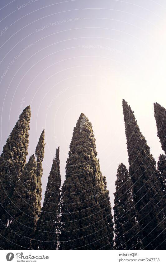 Zypressen. Himmel Natur grün Baum Ferien & Urlaub & Reisen hoch Wachstum Italien Symmetrie Süden mediterran Italienisch Urlaubsstimmung Zypresse Urlaubsfoto Urlaubsort