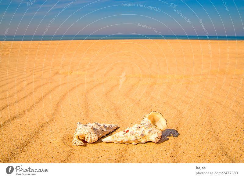 Sandstrand mit Schnecken Freude Erholung Ferien & Urlaub & Reisen Sommer Strand Tier 2 gelb Tourismus Wasserschnecken Meer Küste Himmel blau Sommerurlaub