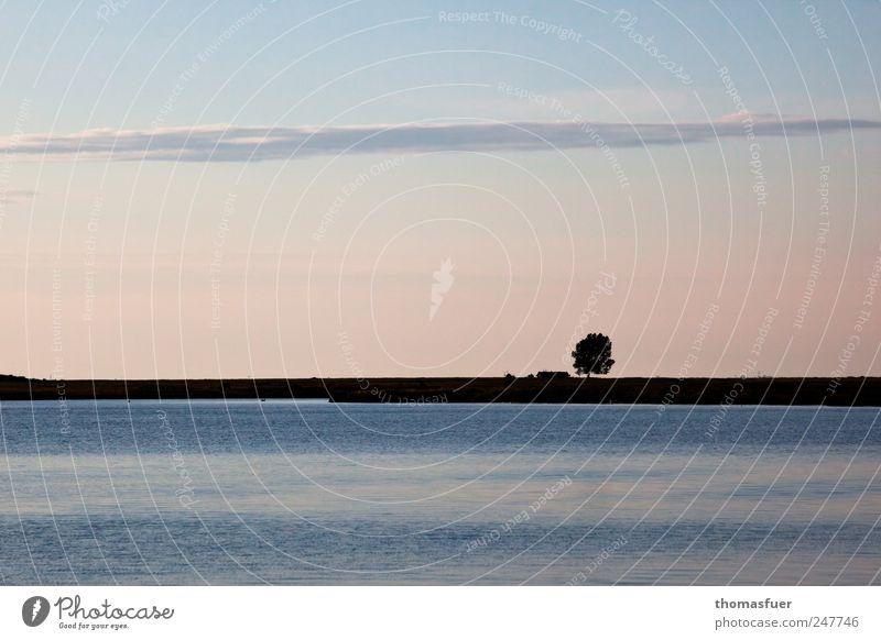 Hochsommerabend in pastell Himmel Natur Wasser Baum blau Sommer Meer Ferien & Urlaub & Reisen ruhig Ferne Landschaft Küste Stimmung Luft Erde glänzend