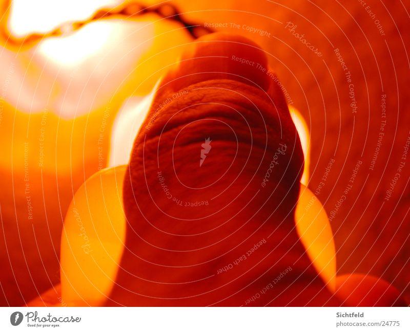 Serie Gummibär rot Lampe dunkel Wand Stil orange Finger Energiewirtschaft Elektrizität Draht Daumen Fingernagel Nagel Gummibärchen Lichterkette Hand