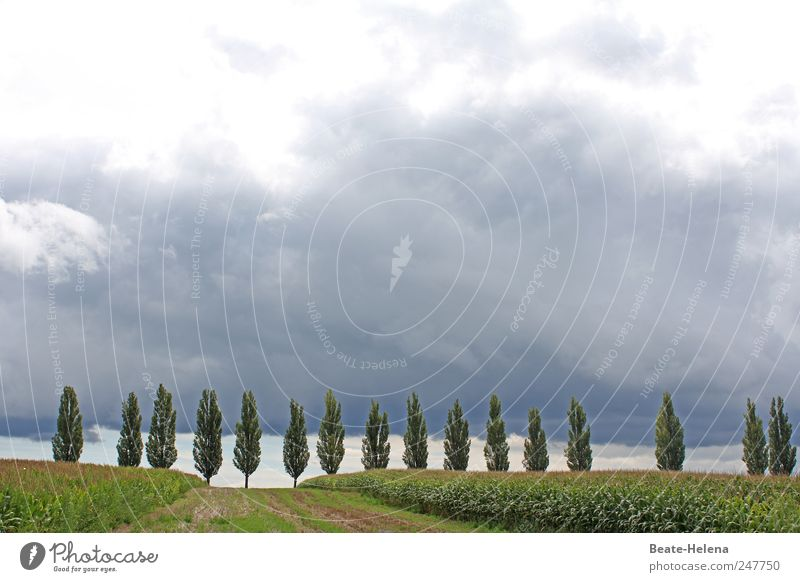 Tiefdruckgebiet Himmel Natur grün Baum Sommer Ferien & Urlaub & Reisen Wolken Erholung dunkel Landschaft grau Wege & Pfade Feld Horizont Ausflug wild