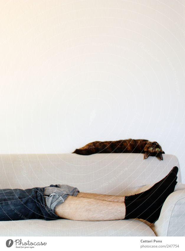 zusammen abhängen! maskulin Mann Erwachsene 1 Mensch Jeanshose Strümpfe Haustier Katze Tier Erholung genießen liegen schlafen Blick träumen Häusliches Leben