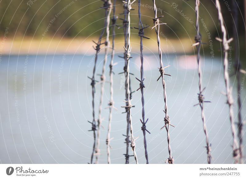 Stacheldraht Natur Wasser weiß grün blau Sommer Gefühle Umwelt Traurigkeit Küste Stimmung See Angst Kraft nass Schwimmen & Baden