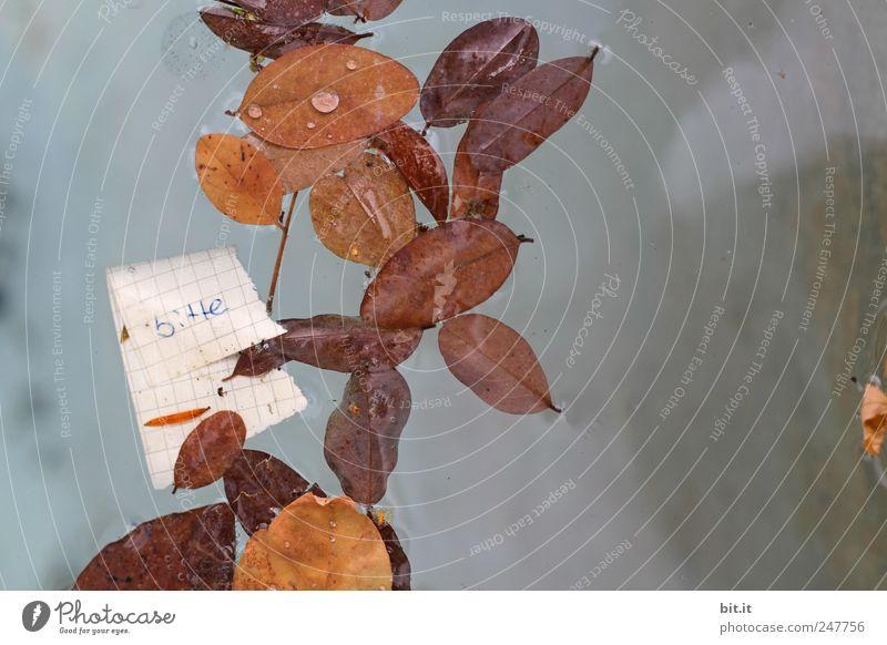 bitte Umwelt Natur Urelemente Wasser Herbst Klima Blatt Schreibwaren Papier Zettel Schriftzeichen nass braun Wahrheit Ehrlichkeit Inspiration Kommunizieren