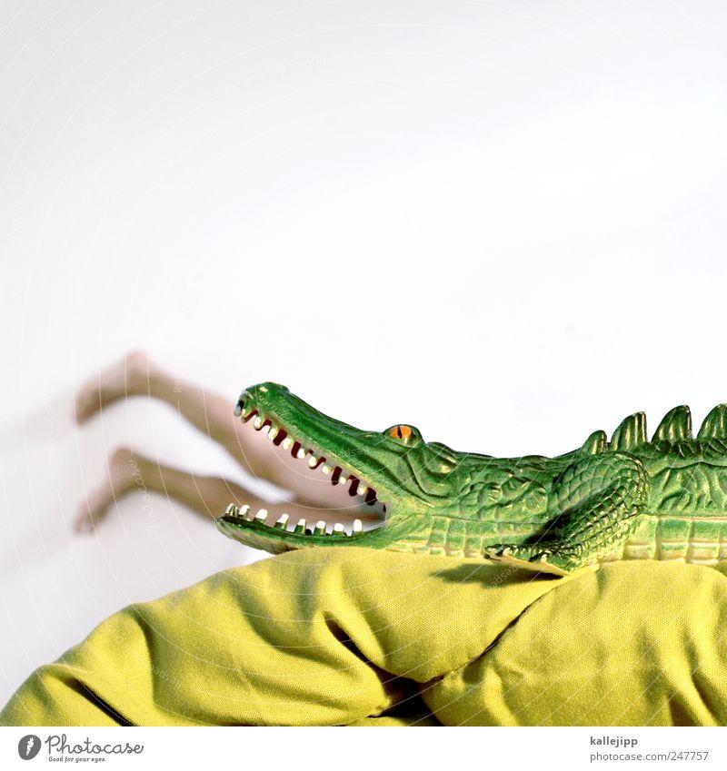 lacotze Mensch Mann grün Freude Tier Erwachsene Beine Fuß maskulin Wildtier bedrohlich Zähne Gebiss Spielzeug Todesangst Appetit & Hunger