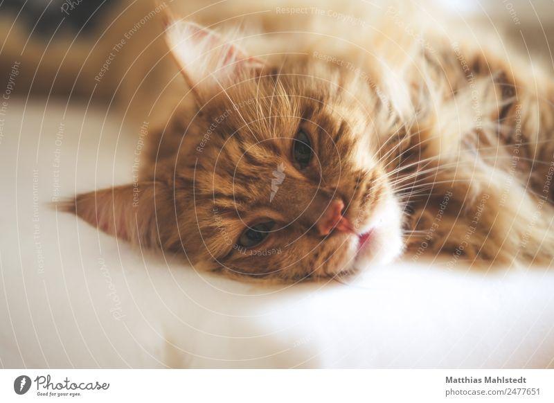 Marley Katze schön Erholung Tier Wärme natürlich Gefühle braun Stimmung Zufriedenheit träumen Warmherzigkeit niedlich schlafen weich Sicherheit