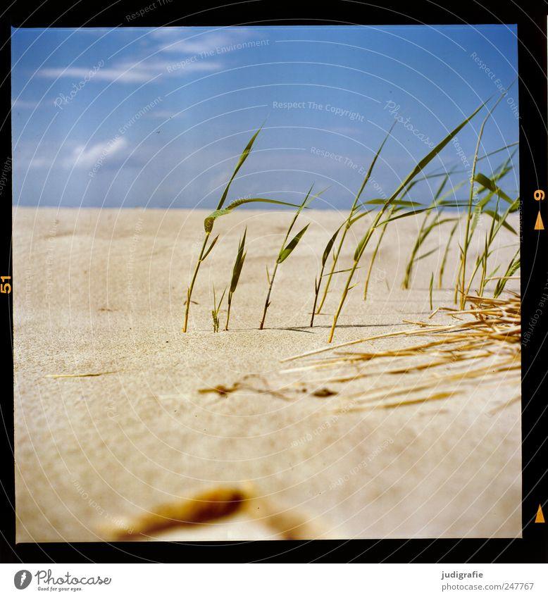 Ostsee Himmel Natur Pflanze Sommer Strand Ferien & Urlaub & Reisen Landschaft Umwelt Gras Sand Küste Wärme Wachstum Perspektive natürlich Idylle