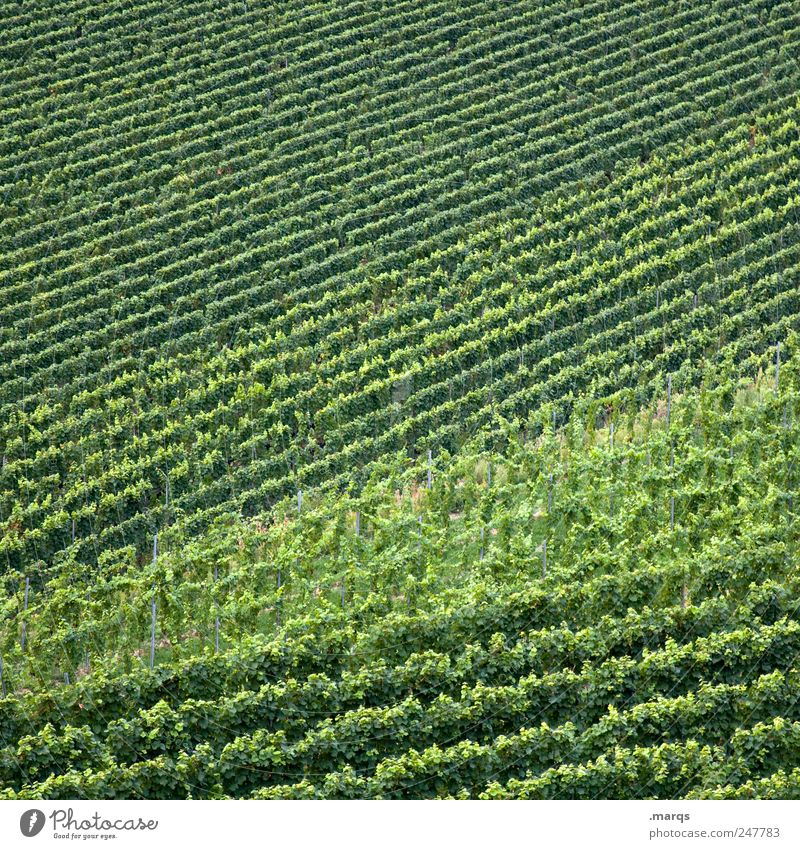 Neuer Wein Natur grün Farbe Linie Wachstum einfach Landwirtschaft Forstwirtschaft Grünpflanze Weinberg Handwerker Winzer Kaiserstuhl