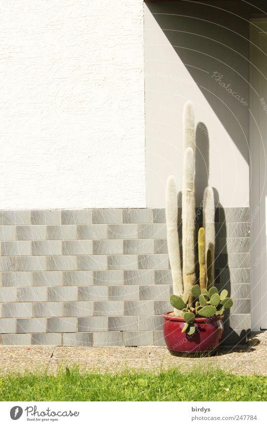 Der Wächter Sommer Schönes Wetter Kaktus Einfamilienhaus Fassade stehen warten ästhetisch außergewöhnlich rebellisch grau grün Gelassenheit standhaft sparsam