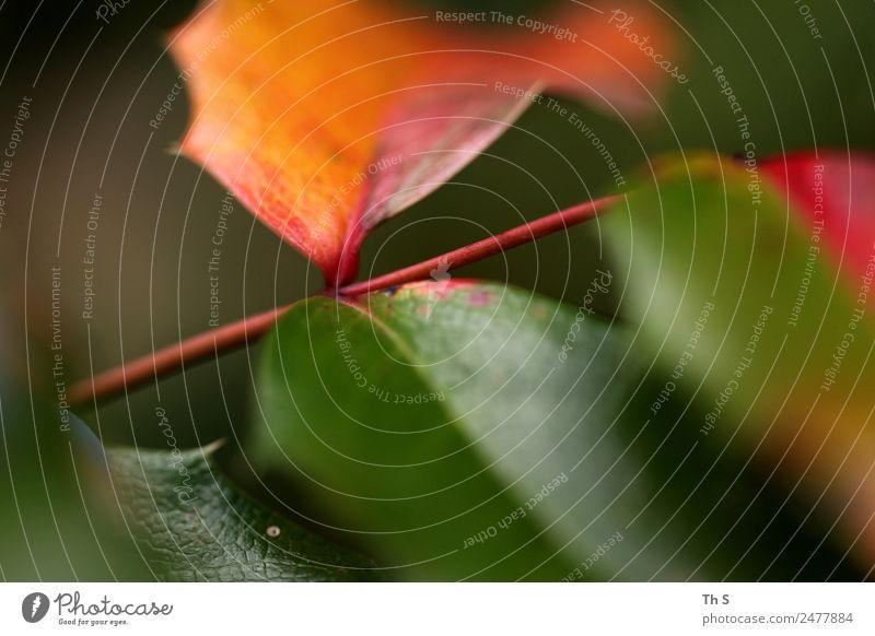 Blatt Natur Sommer Pflanze grün rot ruhig Herbst Frühling natürlich Bewegung braun elegant frisch ästhetisch Fröhlichkeit